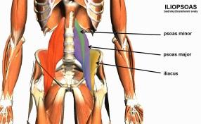 iliopsoas anatomy